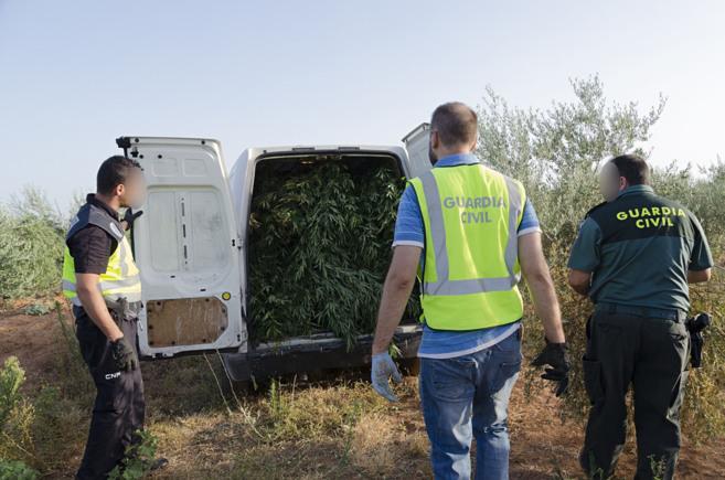 La Guardia Civil incautando la plantación de la marihuana.