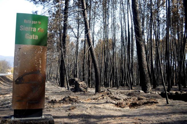 Los efectos del fuego en la Sierra de Gata entre las poblaciones de...