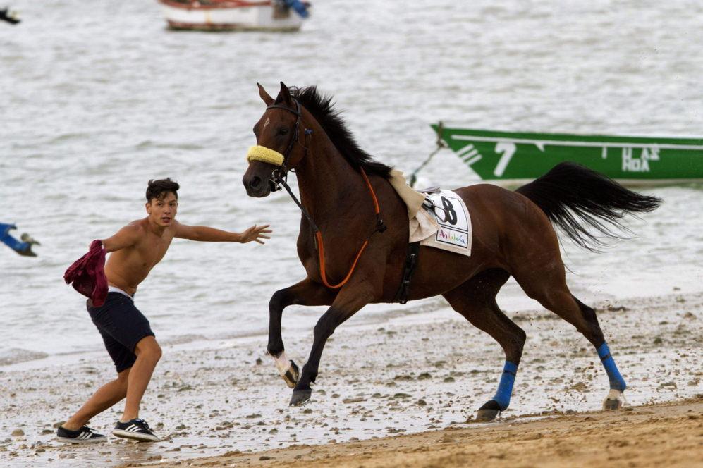 Un caballo en la playa de Sanlúcar de Barrameda el pasado jueves