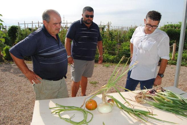 Visita del regidor de Agricultura a los huertos urbanos, que ya están...