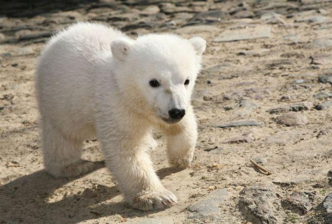 Knut nació en el año 2006 y murió en 2011