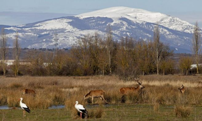 Aves acuáticas y varios ciervos en el humedal de Salburua, a las...