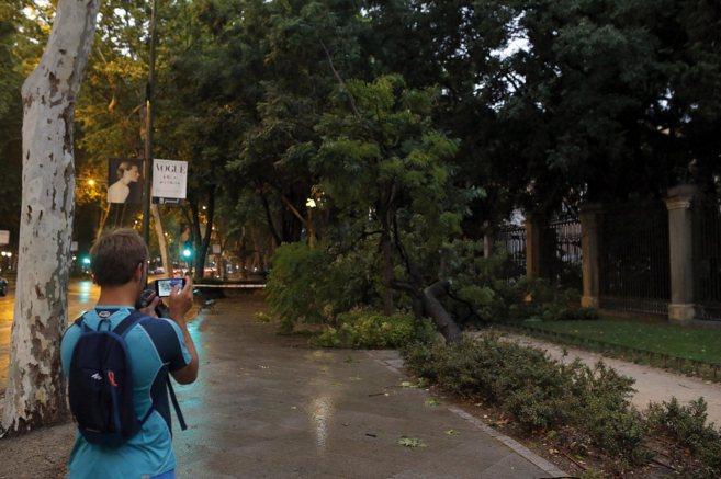 Un árbol caído en pleno paseo del Prado tras la intensa tormenta.