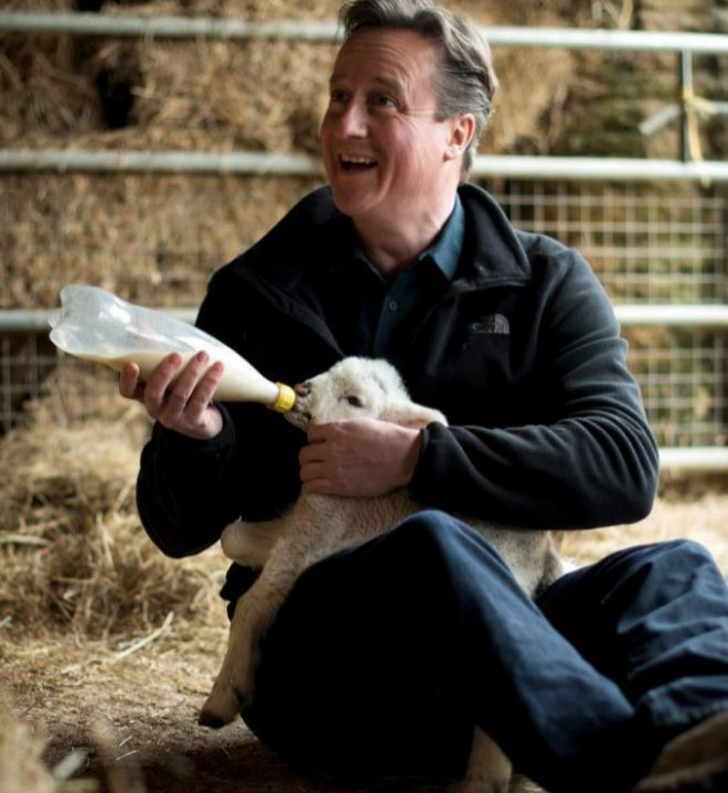 El primer ministro británico, David Cameron, alimenta a un borrego...