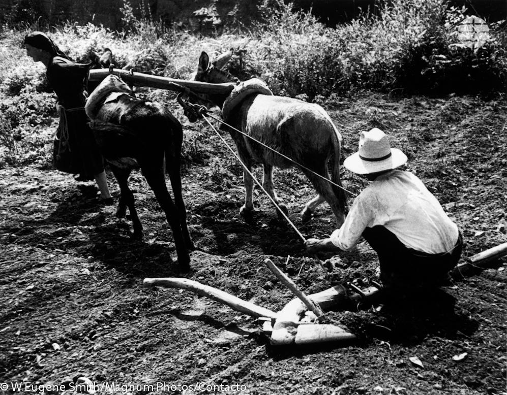 Tiempo de la siembra. Un aldeano empuja su arado para hacer surcos en el suelo seco mientras una vecina guía al burro.