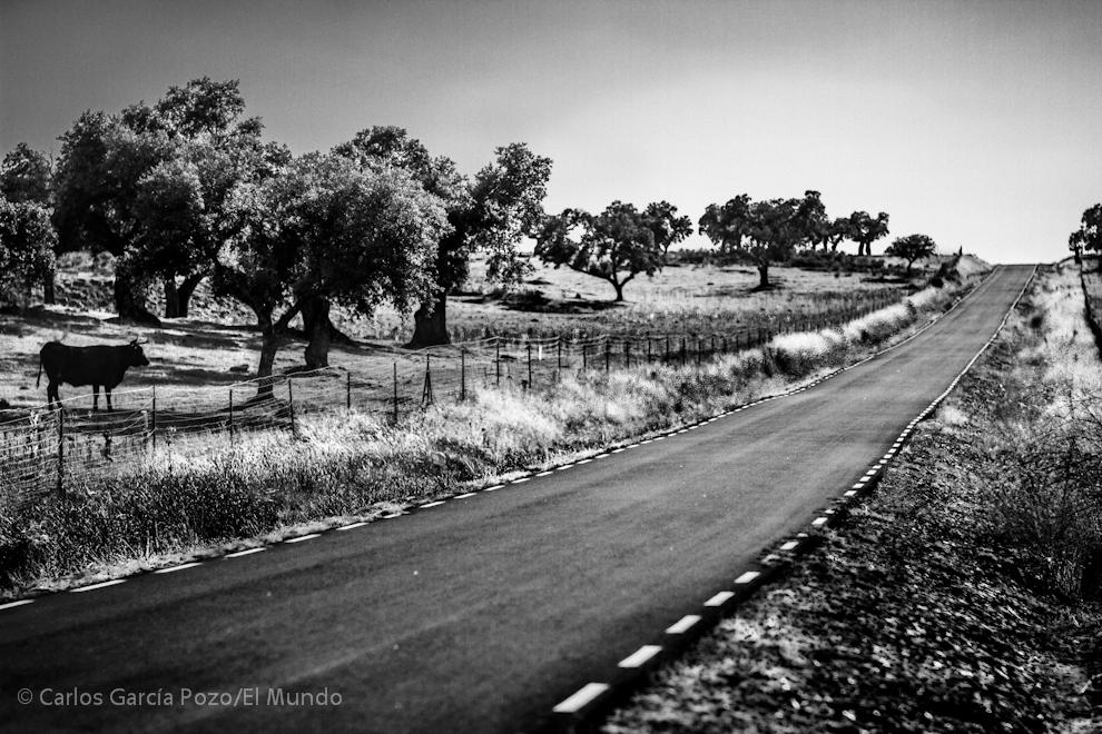 Paisaje de dehesa, carreteras interminables, soledad y ganado.