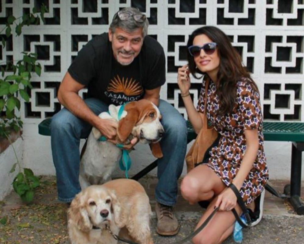 Esta semana nos enterábamos de cómo George (54) y Amal Clooney (37)...