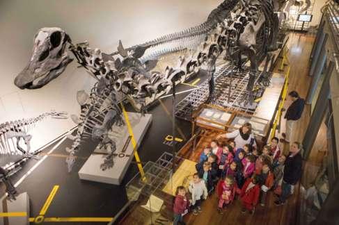 Visita de los niños del CEIP La Zarzuela al Museo de Ciencias Naturales.