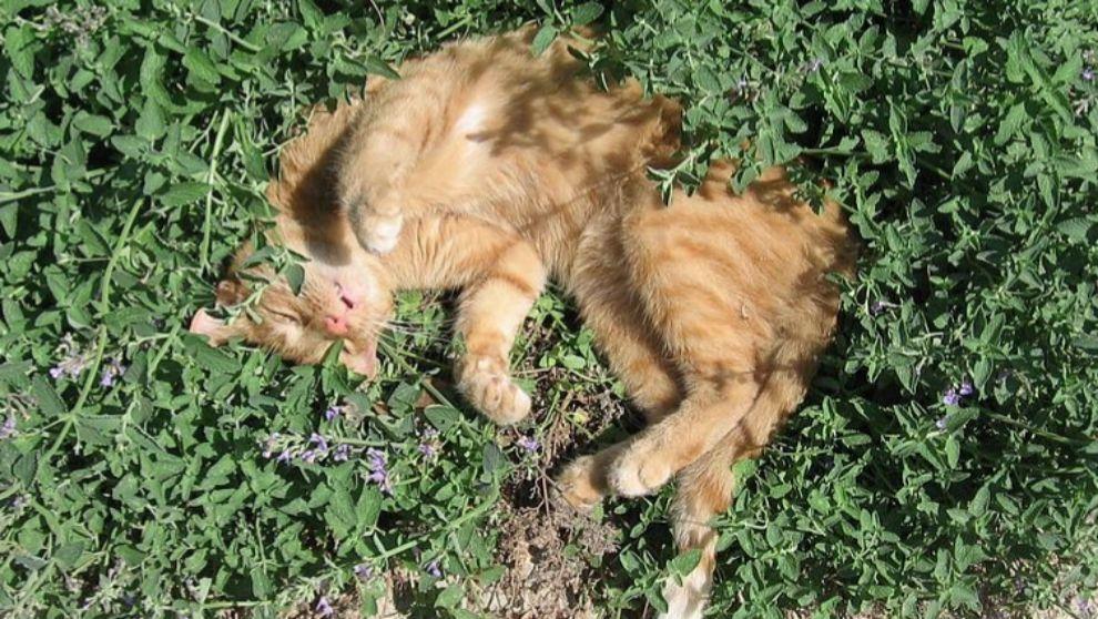 Los animales también se drogan (y mucho): gatos, cabras, hormigas...