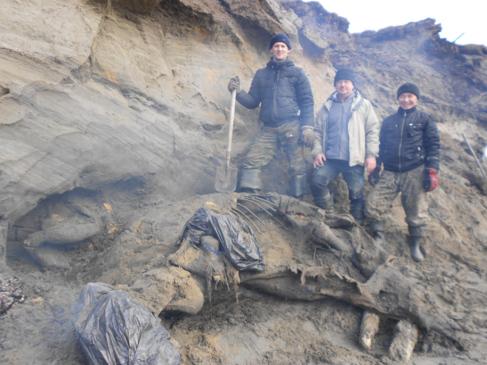 Tres de los investigadores posan junto al mamut lanudo.