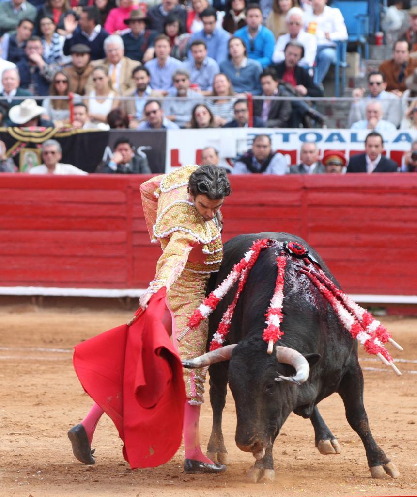 """El torero español José Tomas lidia su primer toro de la tarde""""..."""