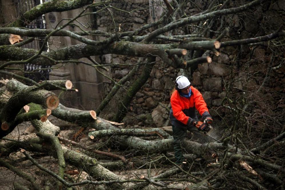Un operario corta un árbol que ha sido derribado por el viento a las...