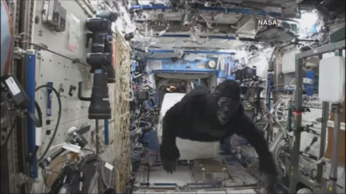 El astronauta Scott Kelly, disfrazado de gorila en la Estación...