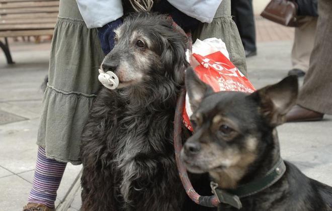 Dos perros, en Valladolid.