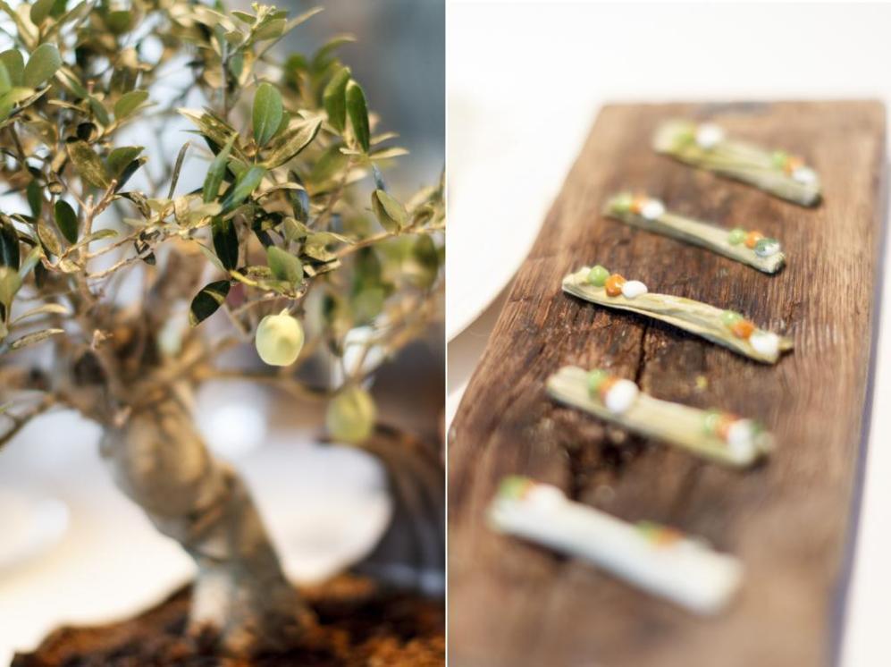 De un bonsai verdadero brotan riquísimas olivas verdes heladas. De...