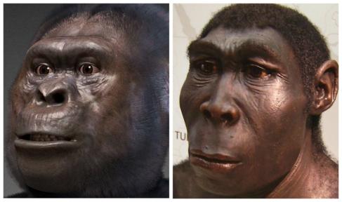 Recreación de un 'Australopitecus', a la izquierda, y de un...
