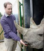 El Príncipe Guillermo con un rinoceronte en un zoo de Inglaterra en...