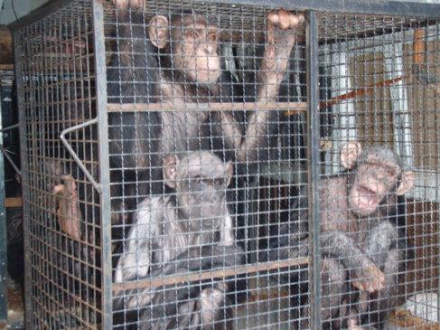 Tarzán y Loti junto a su madre, Chita, cuando fueron rescatados.