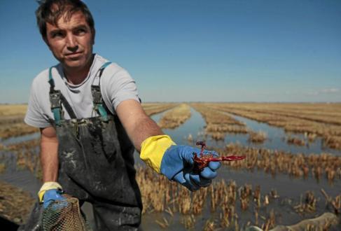 Carlos Arriaza, pescador de cangrejo de Isla Mayor, muestra un...