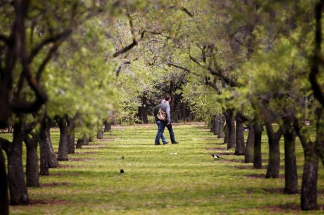 Dos personas pasean entre los almendros en flor en el parque de la...