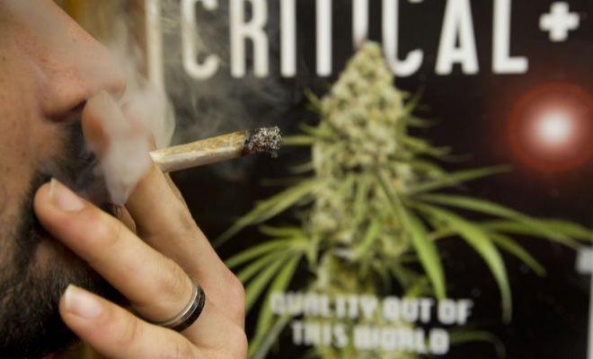 Muchos europeos se marchan a recolectar marihuana a California en...