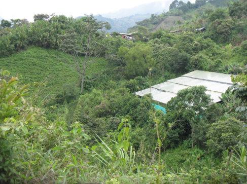 Plantación de marihuana en Tacueyó, región en la que no hay...