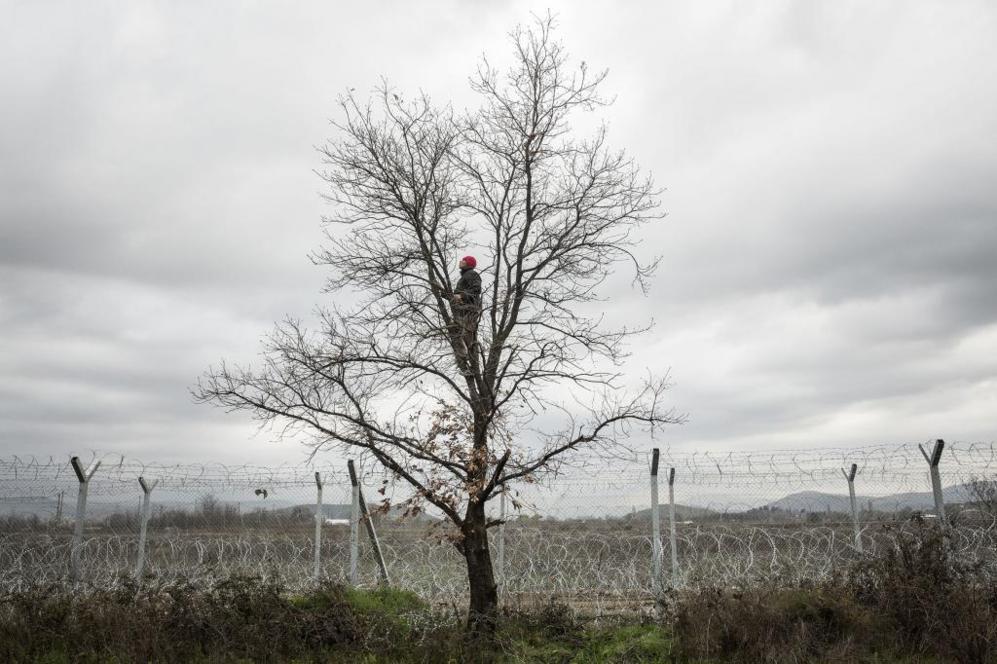 Un hombre coge ramas para encender un fuego subido en un árbol pegado...