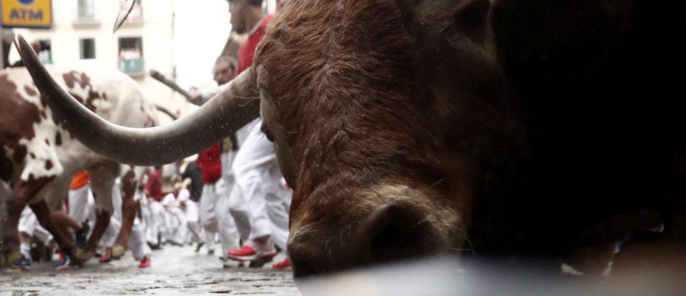 Primer plano de uno de los toros en la valla de Estafeta