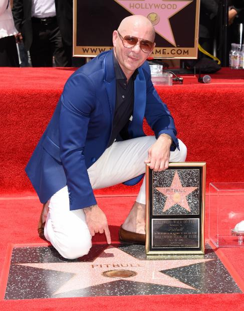 Pitbull ha sido homenajeado con una estrella en el Paseo de la Fama de...