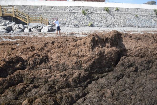 El alga invasora que amenaza el Estrecho de Gibraltar