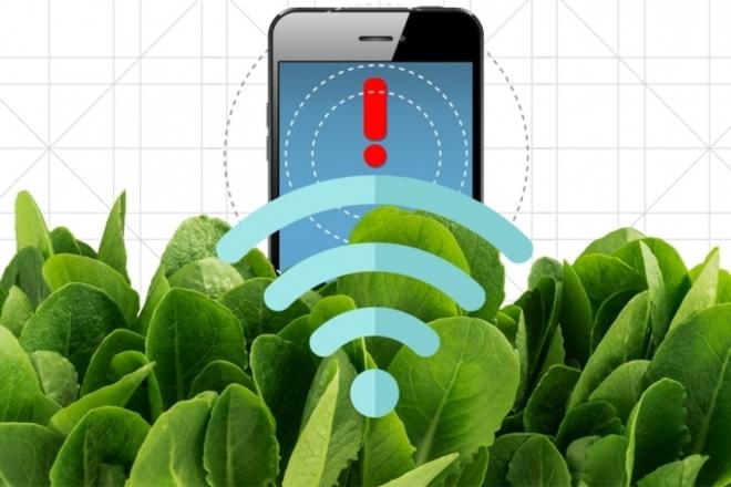 La señal emitida por el sensor que integra espinacas y nanotubos de...