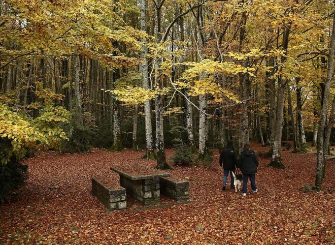 Dos personas se adentran en un bosque de hayas en la zona conocida...