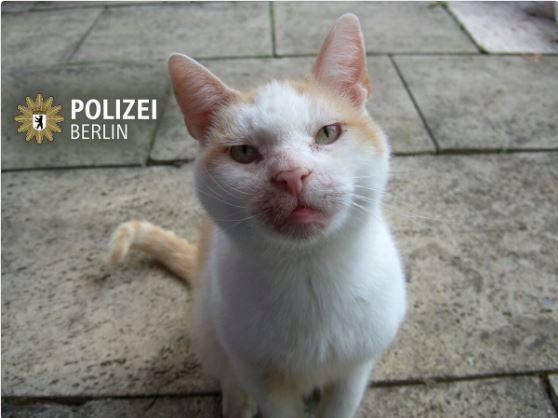 Con este gato y el 'hashtag' #AusGruenden, la Policía de Berlín pide discreción a los ciudadanos.