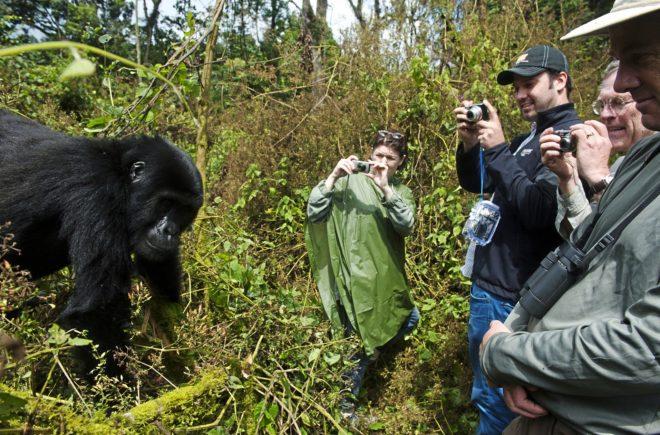 c6fe51779a8d En busca de los últimos gorilas
