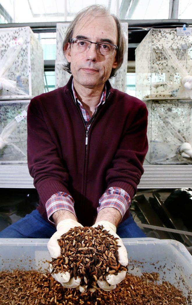 El señor de las moscas y su granja de 20 millones de insectos al año