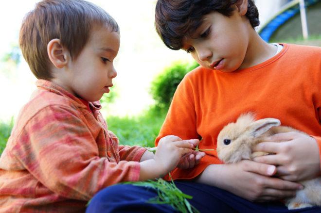 Dos niños dan de comer a un conejo.