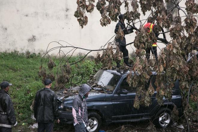 El ciclón Enawo ha provocado la caída de árboles en Madagascar.