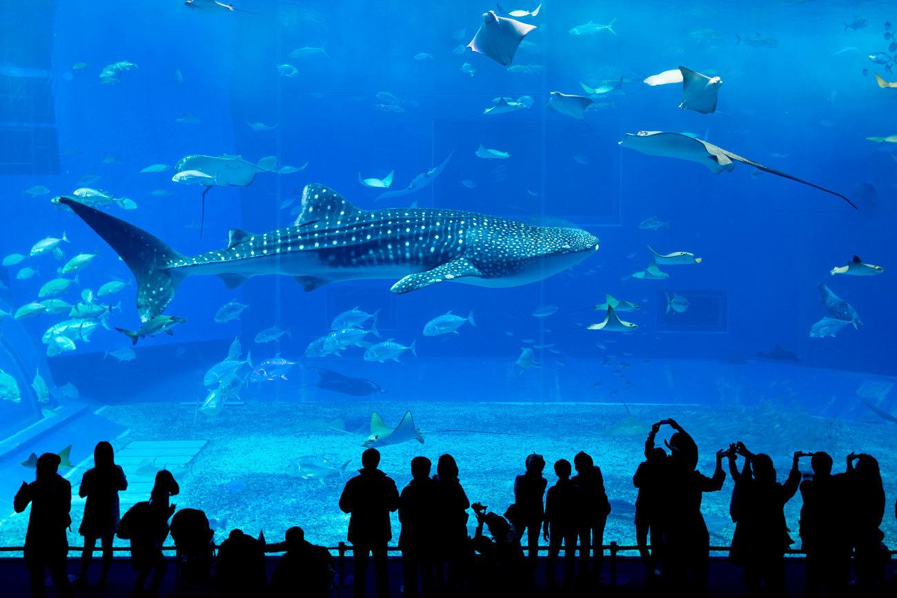 te dejamos una breve lista de los ms inslitos acuarios que existen en el planeta muchos de ellos entre los ms grandes del mundo