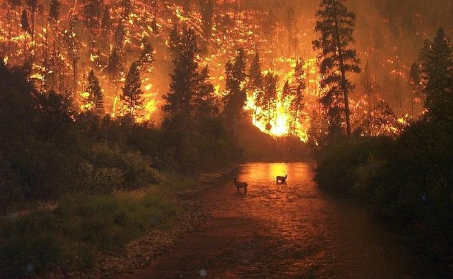Arde en llamas el Parque Nacional de Bitterroot, situado en Estados Unidos.