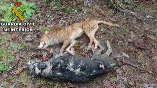 Investigan a un hombre en Galicia por la muerte violenta de perros
