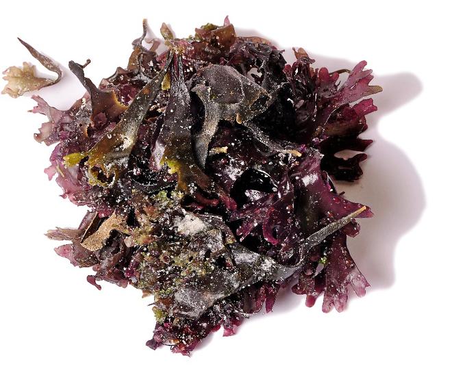 Musgo de Irlanda. También llamada Carragen, es un alga roja que...