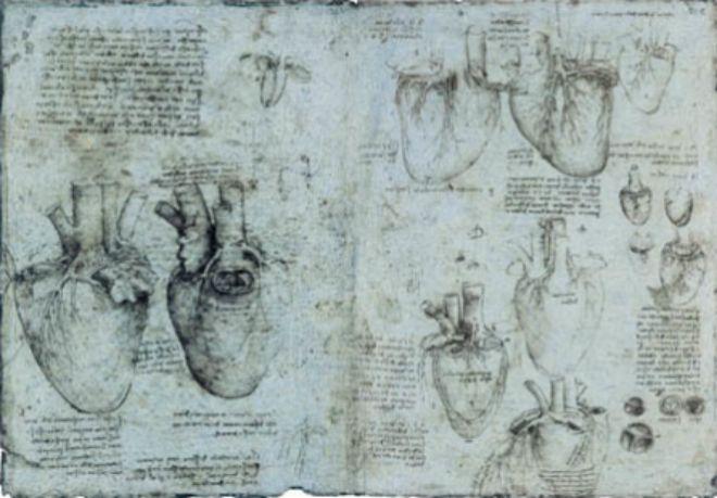 Una de las láminas anatómicas de Leonardo con dibujos y observaciones del corazón.