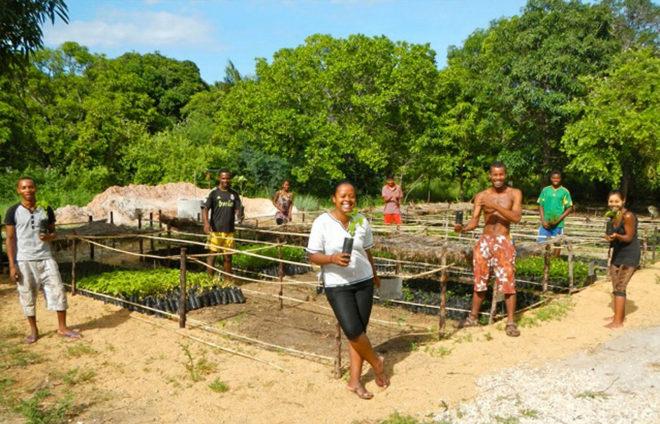 Ecosia, el buscador que compite con Google y ayuda a reforestar el planeta