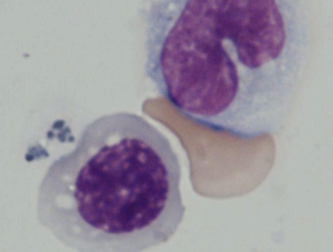 M s cerca de las c lulas madre de la sangre de laboratorio for Celulas fotoelectricas para puertas