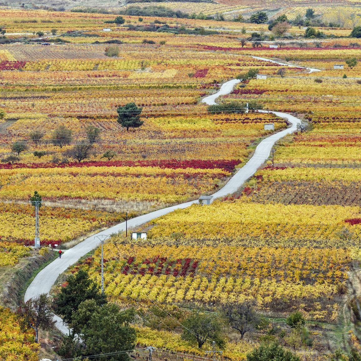 El Camino de Santiago fue declarado el Primer...