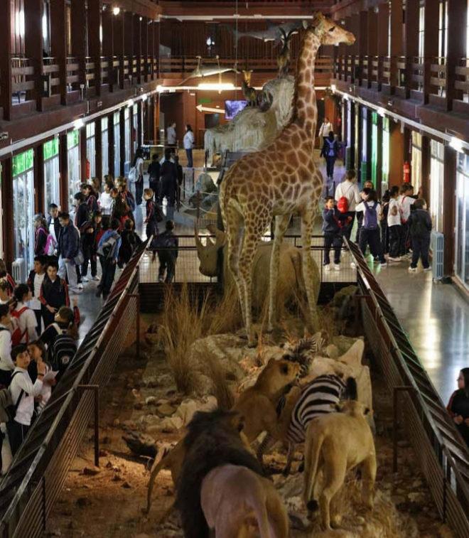 La Conselleria de Cultura aún no reconoce al Museo de Ciencias Naturales El Carmen de Onda