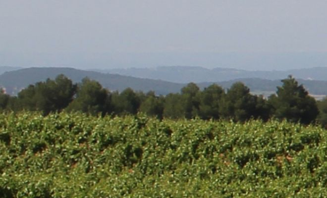 ¿Qué son los vinos naturales?