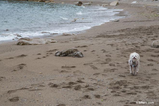 Tía pasea por la playa El Rinconcín, en Gijón.