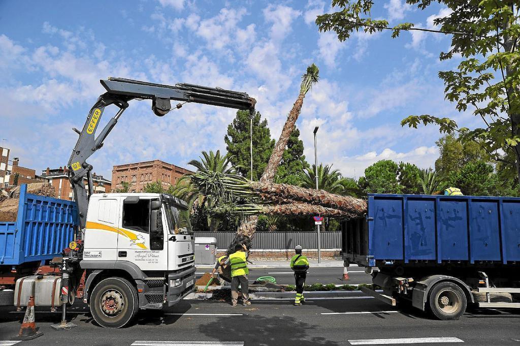 Imagen de archivo de la última plantada de palmeras en Barcelona en...