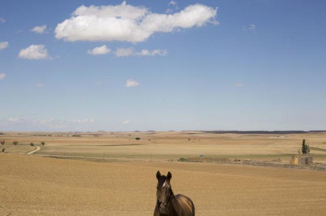 Estampa de campo en Villalón de Campos, con un caballo en primer...